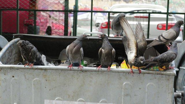 Через блокування сміттєвозів із Жовкви майже тиждень не вивозять відходи