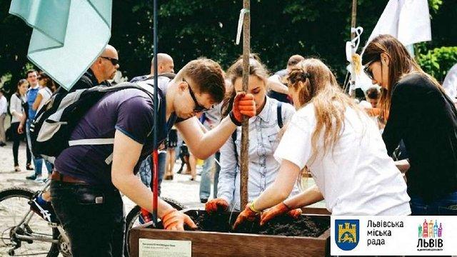 На площі Музейній у Львові висадили райські яблуні та катальпи