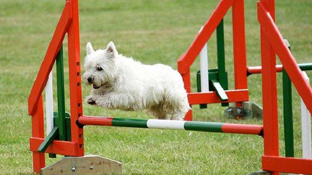 На майданчику для вигулу собак у Львові облаштують собачі тренажери