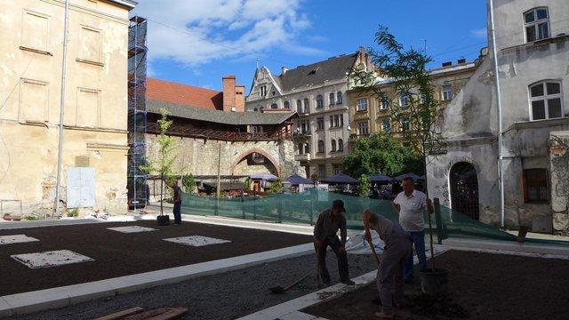У центрі Львова поруч із зруйнованою синагогою висадили дерева