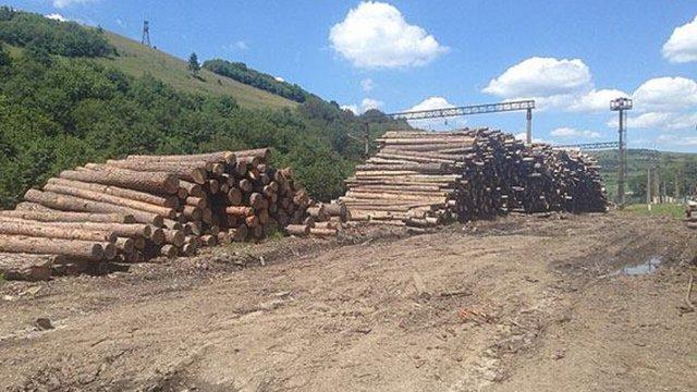 На Львівщині зафіксували незаконну вирубку лісу на ₴7 млн