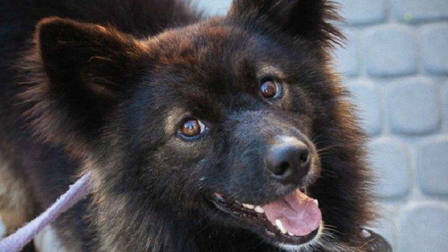 За півроку ЛКП «Лев» знайшло господарів для 154 собак