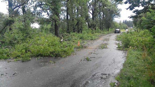 Негода на Львівщині повалила дерева на проїжджу частину