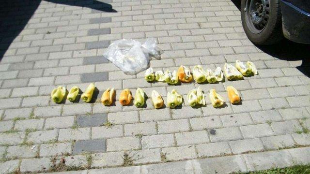 Українці спробували провезти до Угорщини півкілограма амфетаміну у паприці