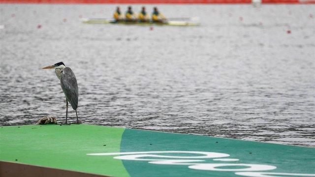 Жіночій команді України з академічного веслування не вистачило п'яти секунд до бронзи