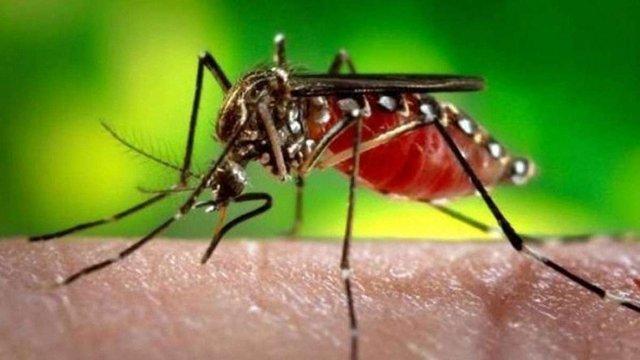 У Пуерто-Ріко через поширення вірусу Зіка оголосили надзвичайну ситуацію