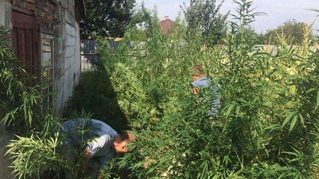 У Волновасі поліція викрила чоловіка, який вирощував коноплю вартістю майже ₴300 тис.