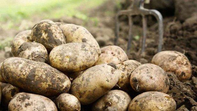 На Київщині чоловік вбив свою дружину за відмову разом копати картоплю