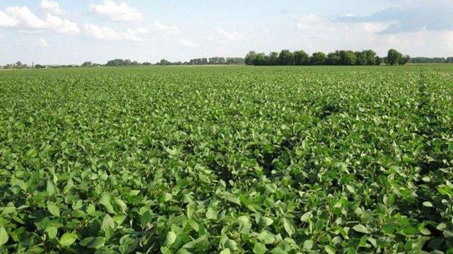 На Львівщині невідомі захопили фермерське господарство