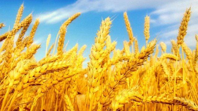 Українські аграрії успішно конкурують із США та Канадою на ринку Мексики