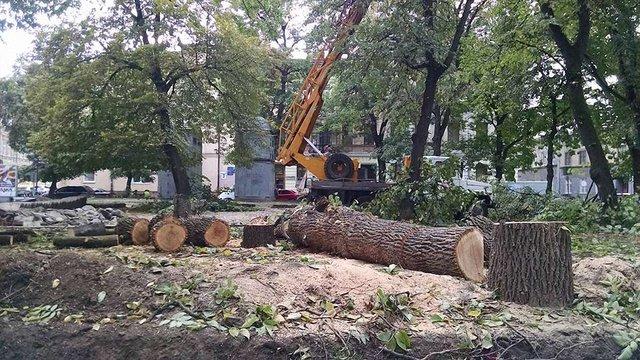 Під час реконструкції площі Маланюка у центрі Львова зрізали чотири дерева