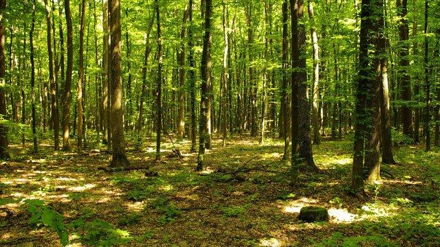 Львів'ян запрошують долучитися до висадки лісу у Соснівці