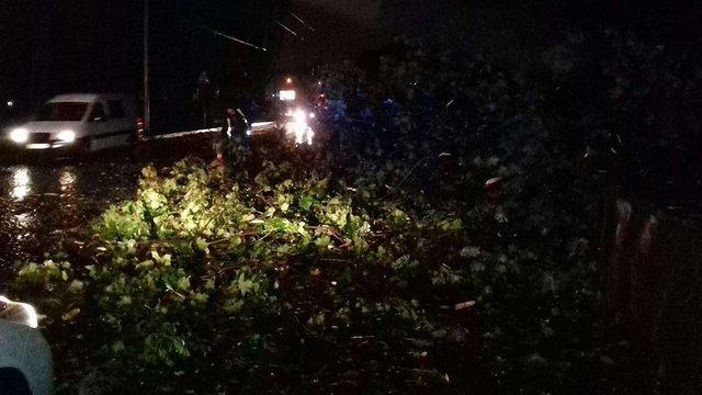 У Львові негода повалила кілька дерев