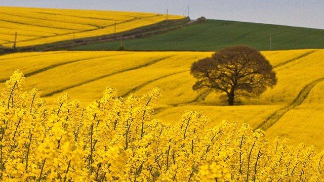 Порошенко підписав закон, що дозволяє отримати пільгові кредити малим і середнім фермерам