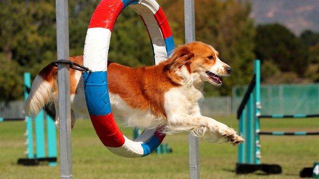 У Львові вперше проведуть змагання з собачого спорту
