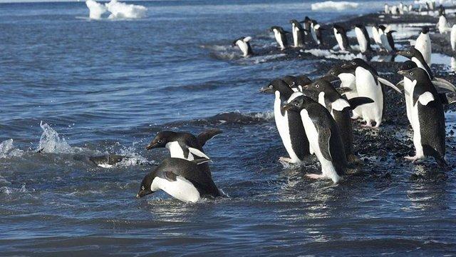 В Антарктиці створять найбільший в світі морський заповідник