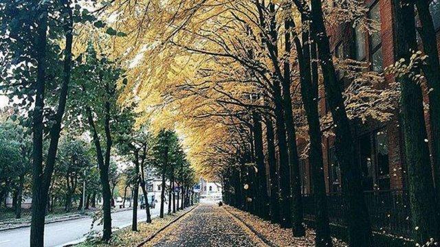Біля колишнього заводу «Полярон» у Львові незаконно зрізали 12 рідкісних дерев