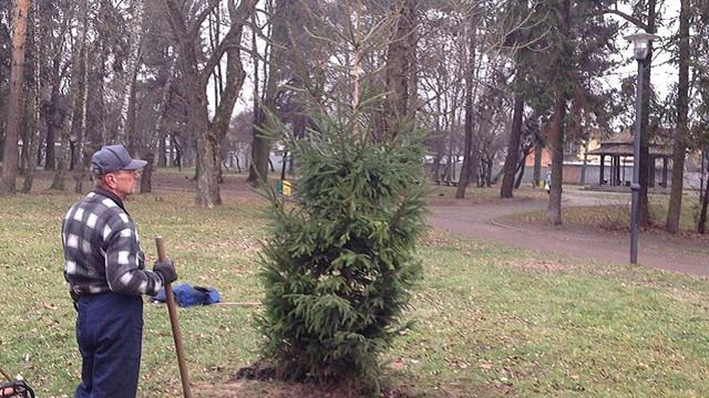 На Левандівці висадили новорічну ялинку