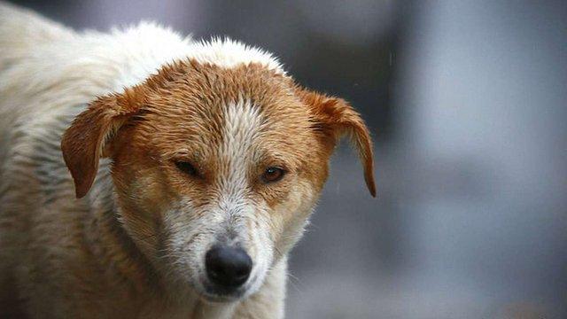 В Одесі запрацювала перша в Україні швидка допомога для безпритульних тварин