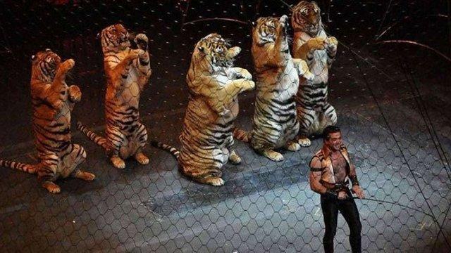 Мінекології підтримало ініціативу заборони використання диких тварин у цирку