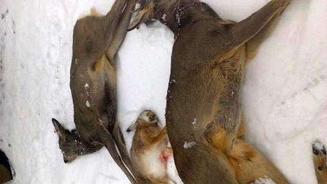 На Київщині затримали групу браконьєрів із вбитим козулями