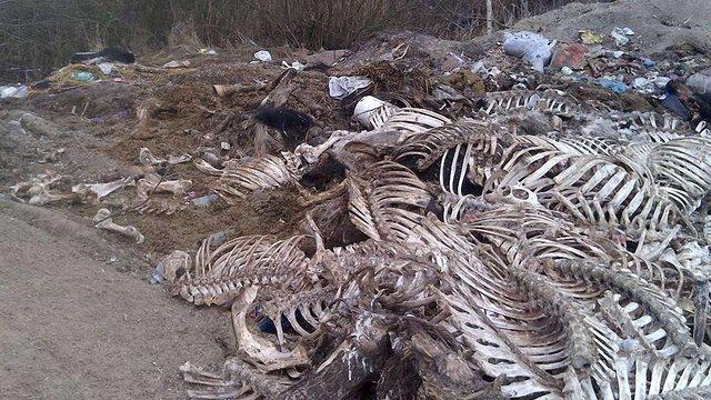На Жовківщині виявили нелегальний скотомогильник площею 3 га