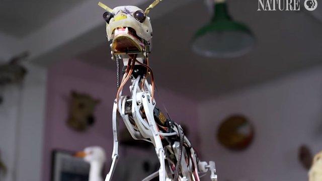Британський інженер створює мініатюрних роботів для дослідження диких тварин