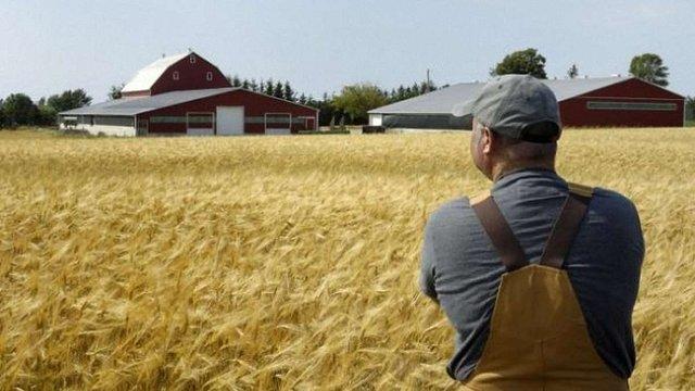 Уряд розподілив дотації для українських аграріїв на 2017 рік