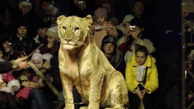 На Чернігівщині застрелили левицю, яка втекла з цирку і напала на людину