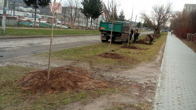 У Львові розпочали весняну висадку дерев
