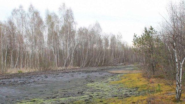 Львівська міськрада підтримала петицію про створення заказника «Торфовище Білогорща»