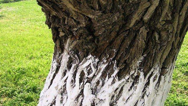 В Києві заборонили білити вапном дерева і бордюри