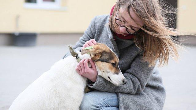 Курс гуманного ставлення до тварин запровадять в усіх школах Львова