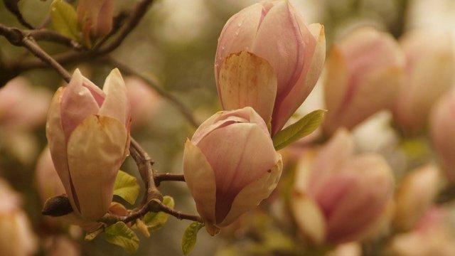 У Львові провели день відкритих дверей у Ботанічному саду