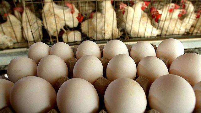 Курячі яйця з України найактивніше купують Об'єднані Арабські Емірати