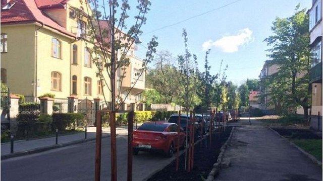У Франківському районі Львова замість аварійних тополь висадили молоді клени
