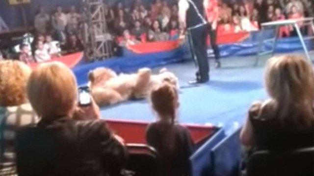 У Білій Церкві ведмідь напав на глядачів цирку