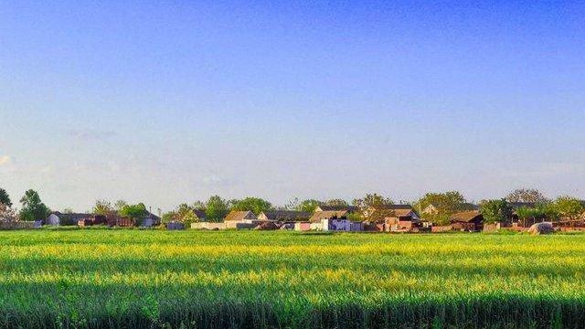 45 затриманих за стрілянину на зернотоці у Вінницькій області взяли під варту