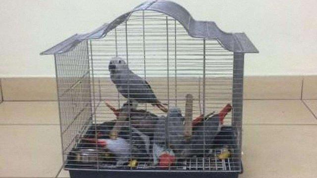 Капітан літака намагався через Одесу ввезти в Україну 7 папуг з Туреччини, - ДПСУ