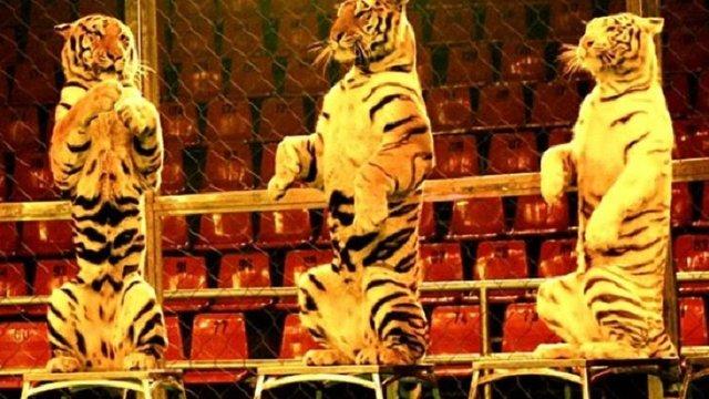 Сейм Латвії заборонив використовувати тварин у цирку