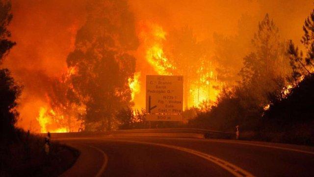У Португалії 16 людей згоріли в автомобілях під час лісової пожежі