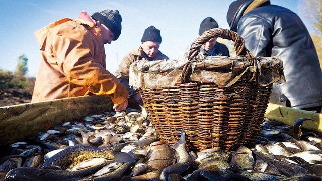 Держрибагентство оцінило тіньовий ринок риби в Україні у ₴6 млрд