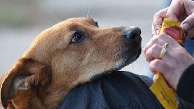 ВРУ ввела штрафи до ₴8,5 тис. і позбавлення волі до 8 років за жорстоке поводження з тваринами