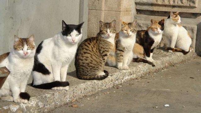 Влада Києва визнала право котів жити в підвалах