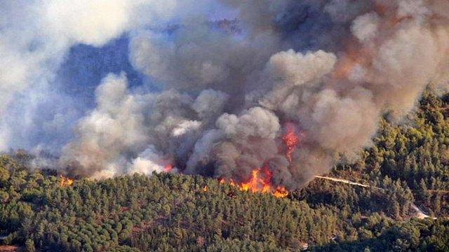 У зоні відчуження ЧАЕС загорілося 25 га лісу, - ДСНС