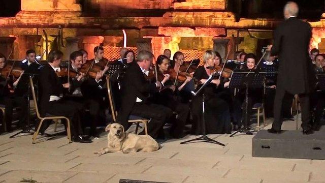 Собака ледь не зірвав виступ Віденського камерного оркестру