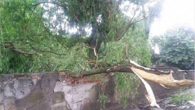 Буревій знеструмив 38 населених пунктів у Львівській області
