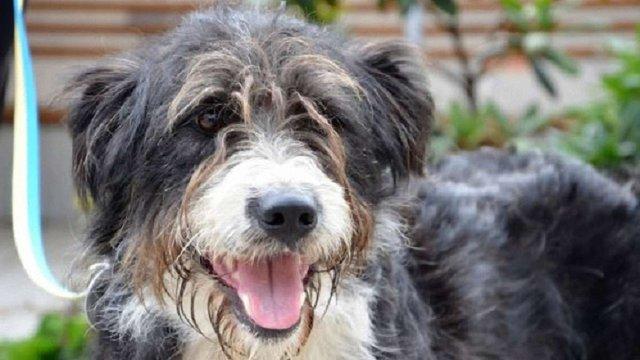За півроку у Львові майже дві сотні безпритульних тварин знайшли домівки