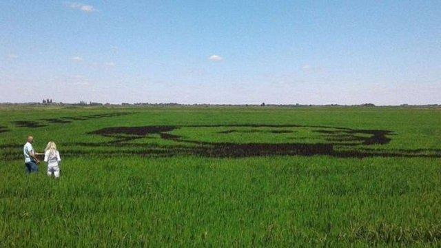 В Україні виростили величезний портрет Тараса Шевченка на рисовому полі