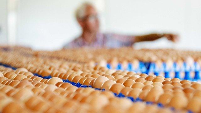 В ЄС зняли з продажу мільйони курячих яєць через виявлення токсичної речовини